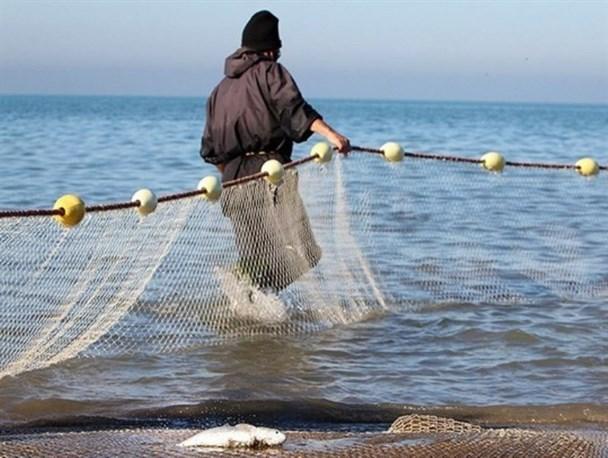 دریای خزر در حال تبدیل شدن به باتلاق است/ صید ماهی خاویار به صفر رسیده است