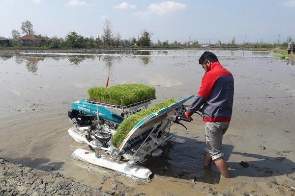 دست برنجکاران مازنی زیر سنگ شالیکوبی داران