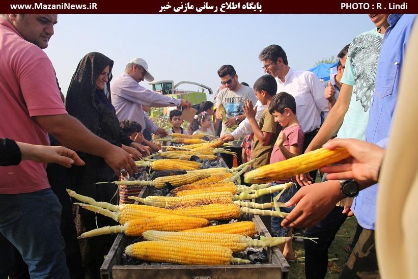 تصاویر / جشنواره «شیر بلال» در شهرستان سیمرغ