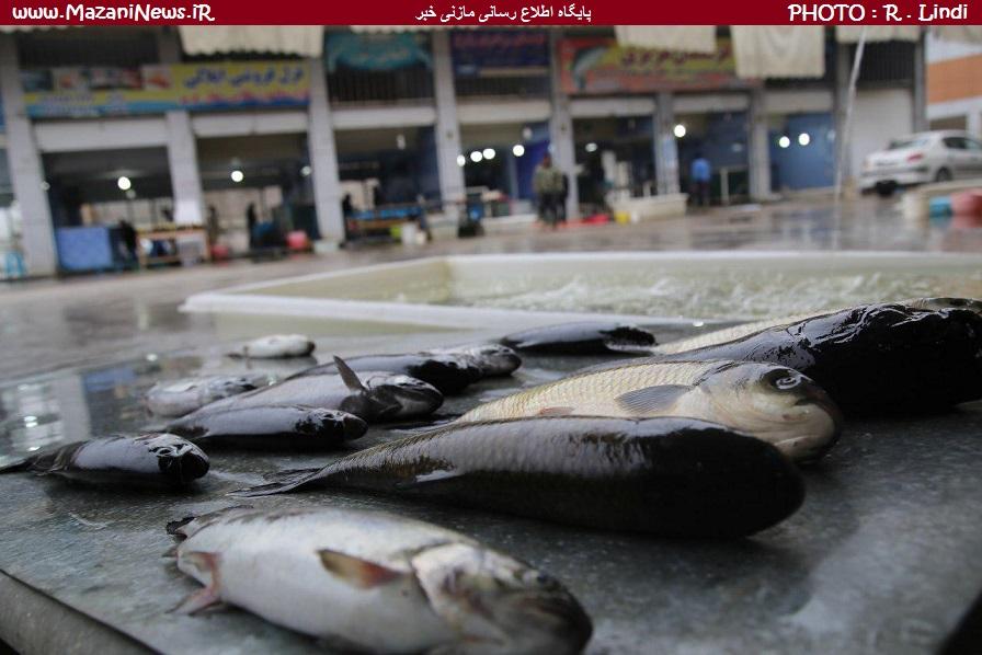 رد پای مسافران انبوه ورودی به مازندران در بازار ماهیفروشی فریدونکنار